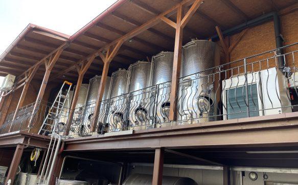Řízené kvašení vína, pro rodinné Vinařství Kubík, ve Velkých Bílovicích